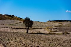 Tree in the middle of the ploughing land. Fertile soil prepeared for the new crops in the plain Royalty Free Stock Photo