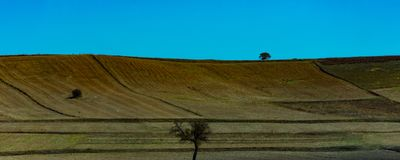 Tree in the middle of the ploughing land. Fertile soil prepeared for the new crops in the plain Stock Photography