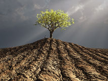 Tree in the middle of plowed field Royalty Free Stock Photo