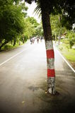 Tree in the middle of the road Royalty Free Stock Image