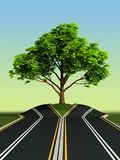 Tree in the middle of road. Big tree growth in the middle of road Stock Photos