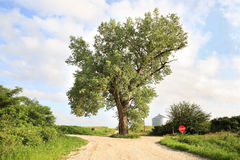 The tree in the middle of the road Royalty Free Stock Photo