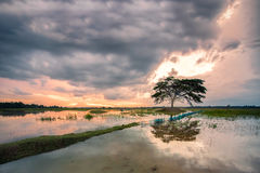 The tree in the middle of the stream,in Kantaluk,Ubonratchathani. Thailand royalty free stock image