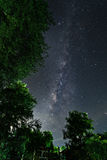 The tree with the Milky Way stock images