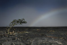 Tree Mimics Rainbow. A lonely tree on a black lava rock landscape leans with the curve of the rainbow in Hawaii Stock Photos