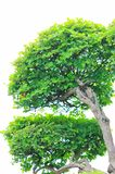 The tree of miniascape. In a garden china Royalty Free Stock Photo