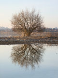 Tree in the mirror Stock Photography