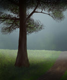 Tree In The Mist. Digital painting of a shadowed tree beside a trail leading into a soft misty forest Royalty Free Stock Photos