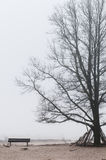 Tree in the mist Royalty Free Stock Images
