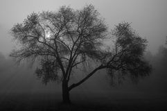 Tree in mist Royalty Free Stock Photo