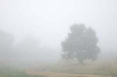Tree in the mist Royalty Free Stock Photos