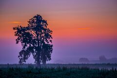 tree in a mist colourful dawn sky