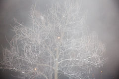 Tree in the mist, decorated with frost Stock Photography