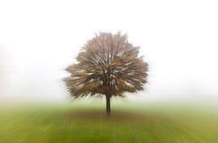Tree in Mist or Fog Stock Photo