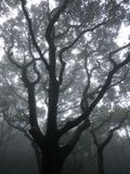 Tree in the mist in Hong Kong Stock Photos