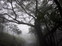 Tree in the mist in Hong Kong Royalty Free Stock Photos