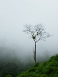 Tree in the mist Stock Image