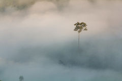 Tree mist. Royalty Free Stock Image