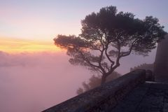 Tree in the mist at sunrise with monastery wall in foreground and beautiful coloured cloudy sky, sant salvador, felanitx, mallorca stock image