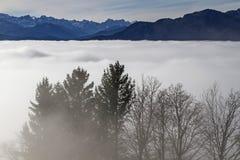 Tree in mist Stock Image