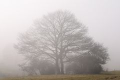 Tree on a misty day Stock Photography