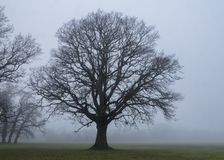 A tree on a misty day on Southampton Common royalty free stock photos