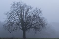 A tree on a misty day on Southampton Common stock photography