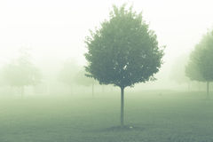Tree  in misty morning Stock Photos