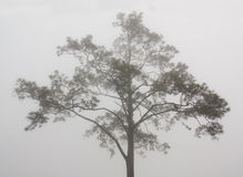 A tree in misty scene Royalty Free Stock Photos