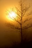 Tree in a misty sunset Royalty Free Stock Photos
