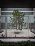 Tree in modern building. Leafy green tree inside modern building royalty free stock image