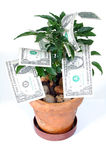 Tree of Money. Yes, money grow on trees stock images