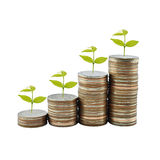 Tree on money growth concept in business Stock Photo
