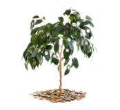 Tree on money isolated. Royalty Free Stock Image