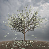 Tree with money leaves - autumn stock image