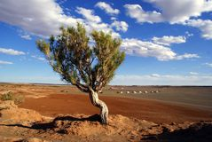 Tree in Mongolia Royalty Free Stock Photography