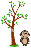 Tree and Monkey Stock Photography