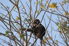 Tree Monkey Stock Image