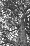 Tree monochrome Stock Photo