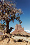 Tree and Monument Valley Royalty Free Stock Photo