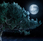 Tree and Moon Royalty Free Stock Photos