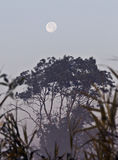 Tree and moon. White moon in forest at the morning stock images