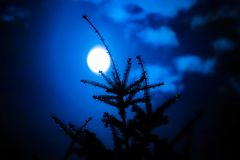Tree with moon in the background stock images