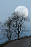 Tree and moon Royalty Free Stock Images