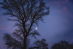 Tree and moon at night