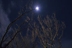 Tree and moon at night. At The Spit beach in the Gold Coast, QLD Royalty Free Stock Images