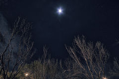 Tree and moon at night Royalty Free Stock Photography