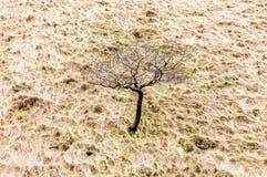 Tree in moorland, Derwent, UK royalty free stock image