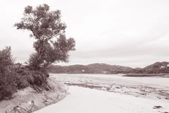 Tree at Morar Bay Beach, Scotland Royalty Free Stock Images