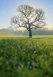 Tree in Morning Light. Dewdrops and early morning light surround a bare tree Royalty Free Stock Photo